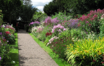 Миксбордер — один из самых сложных элементов садового дизайна. Само понятие «миксбордер» в переводе с английского означает буквально «смешанный бордюр» или «цветник свободных очертаний».