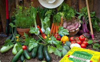 Дрожжи в огороде