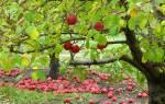Какие удобрения помогут деревьям лучше перезимовать и больше плодоносить