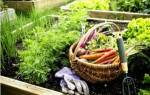 17 дачных растений, обладающих целебными свойствами