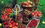 Хитрости и доступные советы начинающему садоводу…
