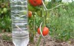 Здравствуйте дорогие садоводы и огородники!