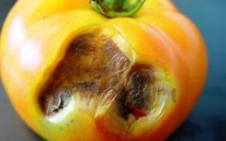 Сухие коричневые пятна на листьях томата: как лечить макроспориоз