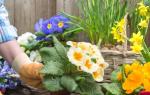 Где и какие цветы сажать