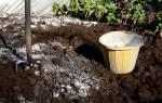 Известь! Побелка! Супер польза известкования грядок и газона в саду и огороде.