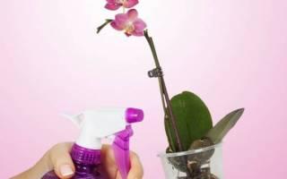Ваша орхидея завяла приготовьте для неё витаминный коктейль