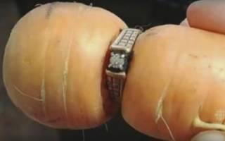 Женщина потеряла в огороде кольцо 13 лет назад.