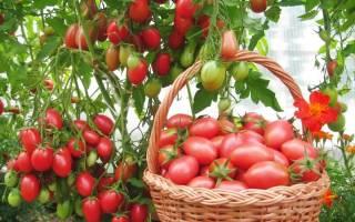 Мои любимые кистевые сорта томатов.