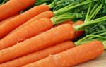 Морковные премудрости. Опыт выращивания