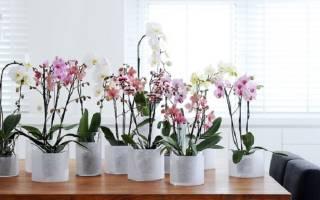 Приблизить счастливый момент цветения орхидеи помогут следующие советы: