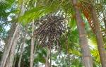 Уникальные свойства растений