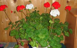 5 комнатных растений, которые должны быть в каждом доме