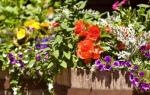 Мобильные цветочные клумбы сделанные из деревянных бочек