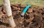 Зачем поливать плодовые деревья осенью Как поливать плодовые деревья осенью секреты влагозарядного полива