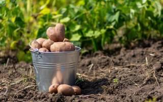 — А в следующем году и картошку копать помогу…)))