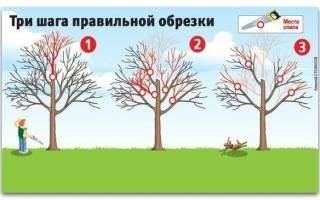 Как вернуть деревьям былую силу. Три шага правильной обрезки!