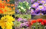 Какие цветы посадить осенью