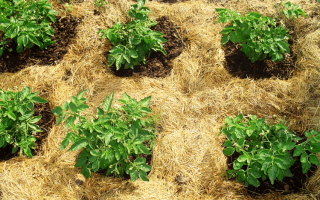 Как сделать почву более плодородной