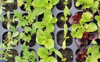 Семена растений, которые необходимо успеть посеять в конце января.