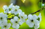 Ваш дачный участок будет самым красивым: 7 цветов, которые стоит посадить в мае!