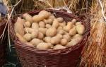 «Синклер» сохранит посадочный картофель до весны.