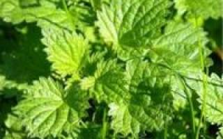 Как сделать удобрение для огорода из крапивы