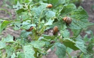 Защита овощей у себя на огороде. Болезни и вредители будут не страшны.