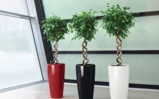 Тенелюбивые комнатные растения для вашей квартиры и офиса