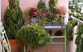 Морозоустойчивые растения для зимнего балкона