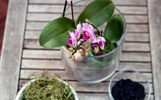 Почему не цветет орхидея и как можно это исправить.