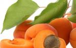 Как обеспечить абрикосу замечательные условия
