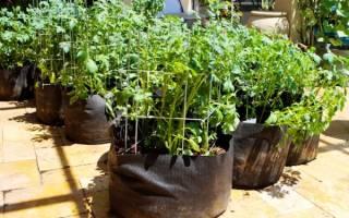 Как выращивать картошку в мешках