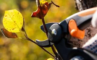 Осенняя обрезка ягодных кустарников.