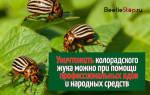 Все способы борьбы с колорадским жуком: выбираем лучший.