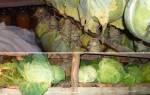 Пять способов, как сохранить урожай капусты.