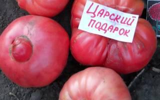 Царский урожай томатов