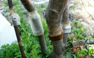 Ловчий пояс для защиты деревьев своими руками: виды, изготовление