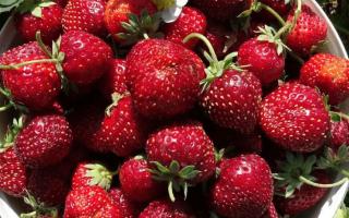 Гибрид земклубника: клубника и земляника в одной ягоде.