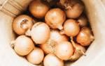 Секрет посадки лука-севка