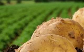 Мы опишем несколько основных способов выращивания картофеля, используемых как иностранными, так и отечественными огородниками. Какой из них выбрать, решайте сами.