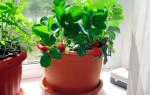 Порадуйте себя и близких, приобретайте набор для собственноручного выращивания клубники в домашних условиях.