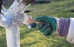 Побелка деревьев — важно и необходимо.